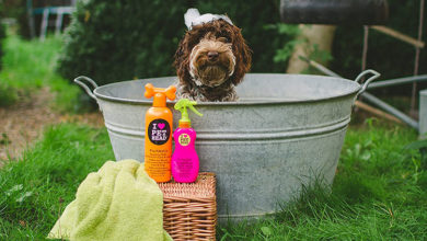 Photo of Best Shampoo for Puppies Reviews All the Time