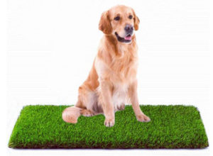 MTBRO Best Artificial Grass, Professional Dog Grass Mat, Outdoor Potty Training and Replacement Grass Mat, Easy To Clean with Drainage Holes, 100 Ounce Sq.Yd, 28Inch X 40Inch