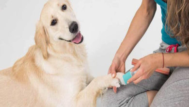 Photo of Top 12 Best Dog Nail Grinder Reviews in 2020