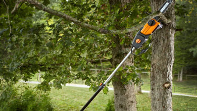 Photo of Top 12 Best Tree Trimmer You Should Review in 2020